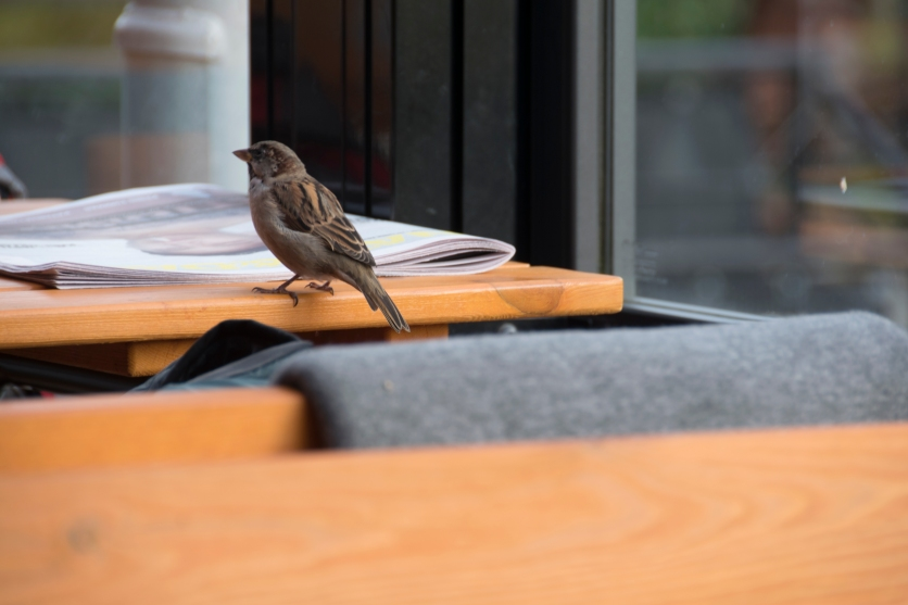 Cafe bird - Løkka Cafe